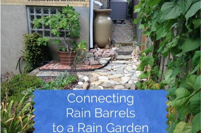 Collecting rain from your roof in rain barrels is a great way to use a free resource to irrigate the garden. However, rain barrels can fill up within minutes during a rain event. Directing rain barrel overflow into a rain garden is one way to keep more water on your property and create more biodiversity, too.