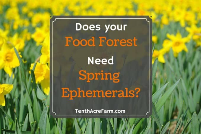 Does your Food Forest Need Spring Ephemerals?