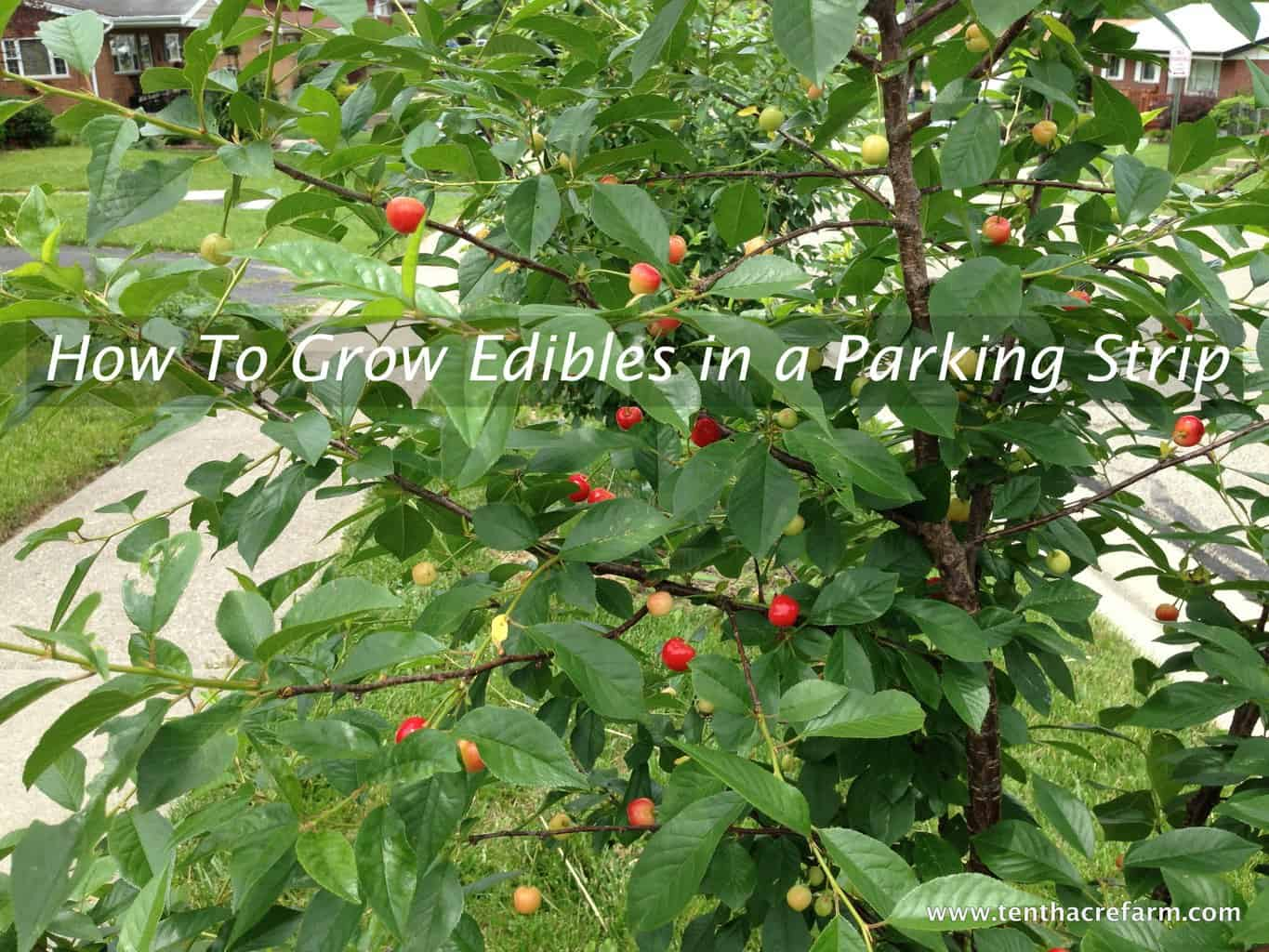 How To Grow Edibles in a Parking Strip