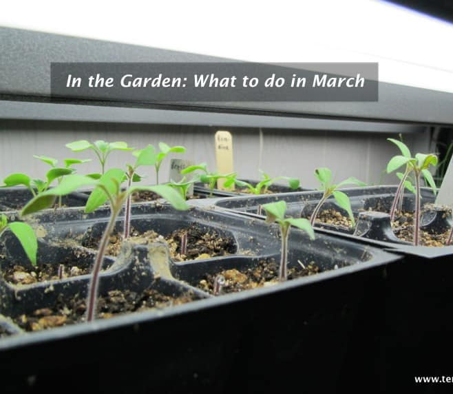 In the Garden: What to do in March