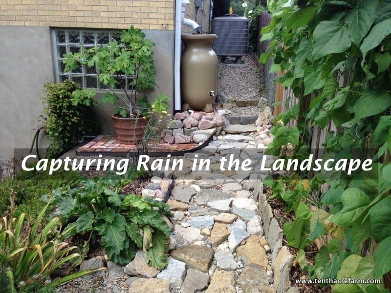 Rain Catchment Class at Tenth Acre Farm