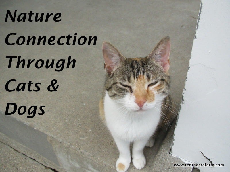 Nature Connection Through Cats and Dogs