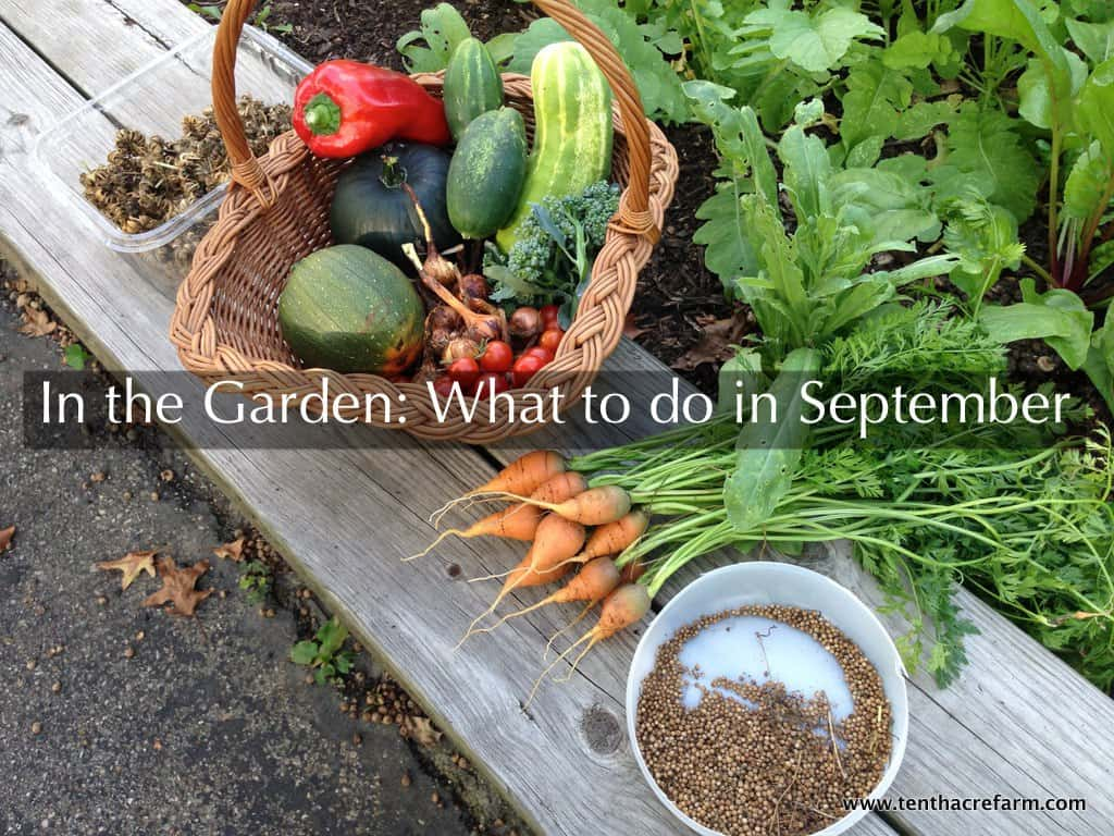 In the Garden: What to do in September