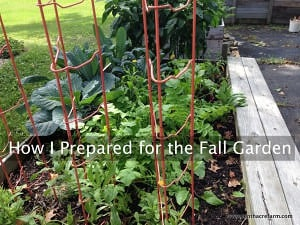 How I Prepared for the Fall Garden