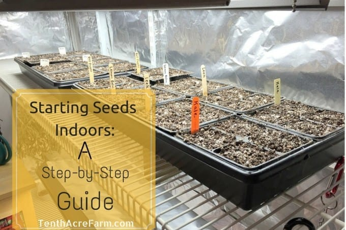 Starting Seeds Indoors: A Step-by-Step  Guide