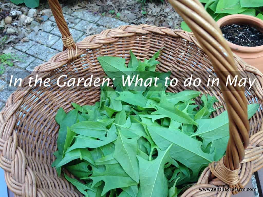 In the Garden: What to do in May