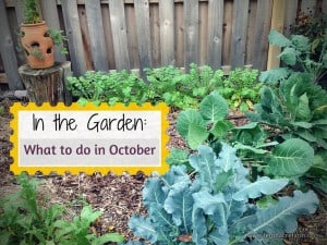 In the Garden: What to do in October