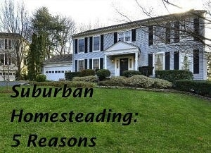 Suburban Homesteading: 5 Reasons